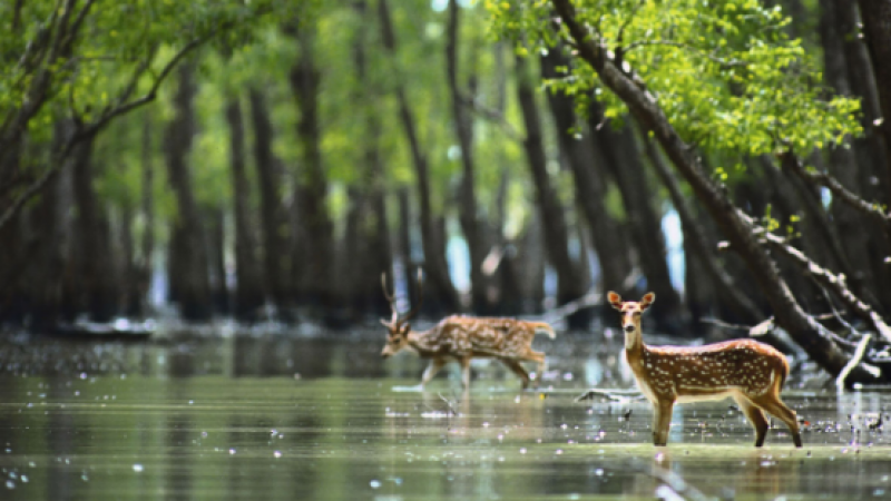 The Sunderbans: A UNESCO World Heritage Site and the largest Mangrove forrest in the world